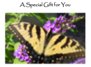 Butterfly gift certificate